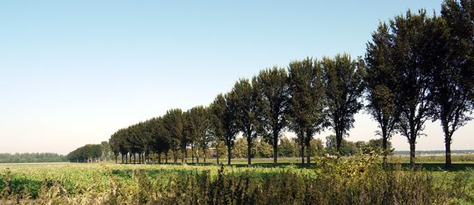 home-bomen